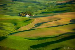 Palouse, Colfax, Washington, fields, wheat, rolling hills, farmland, Steptoe Butte