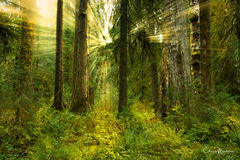 awakening, spiritual awakening, Olympic national park rainforest, old growth forest, sunbeam through trees