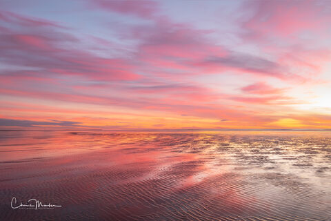 Pastels of the Pacific