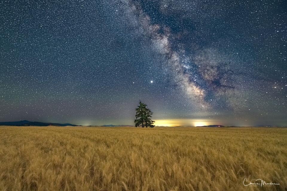 Field of Dreams, Palouse, wheat field, wheat field at night, lone tree