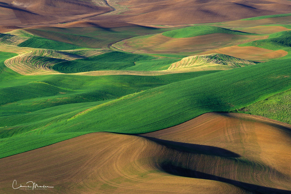 Palouse, Steptoe Butte, Washington, wheat, canola, fields