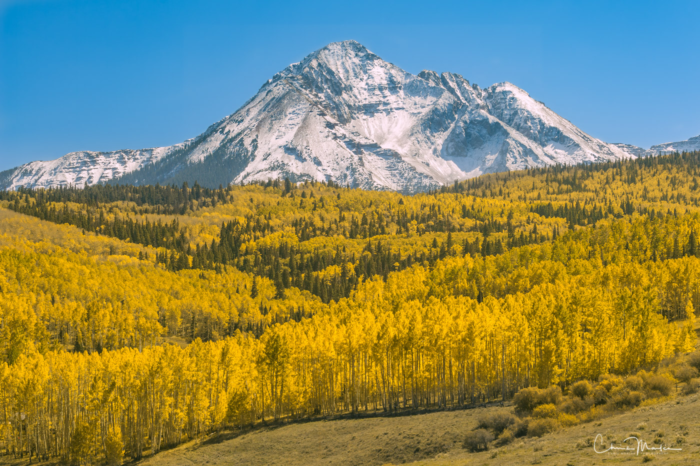 standing tall, dallas divide, aspens, where was true grit filmed, snow capped mountain, photo