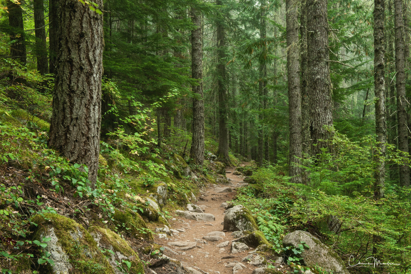 walk in the woods, forest path, Pacific Northwest forest, where does this path lead, Snoqualmie forest, photo