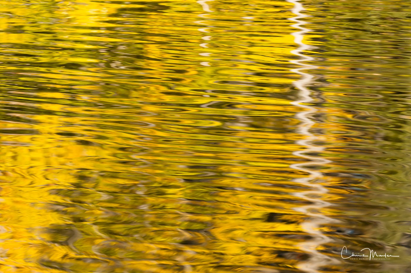 This abstract nature photography image is a reflection of white birch trees and yellow leaves in a Michigan lake. A slight breeze...