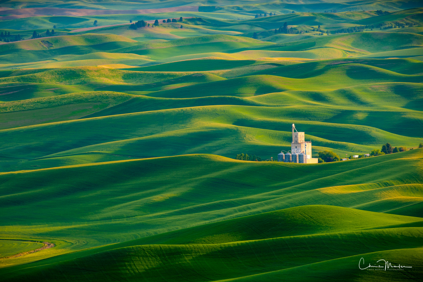 Palouse, Colfax, Washington, Steptoe Butte, rolling hills, fields, wheat, green, homestead, growers, farmers, granary, photo