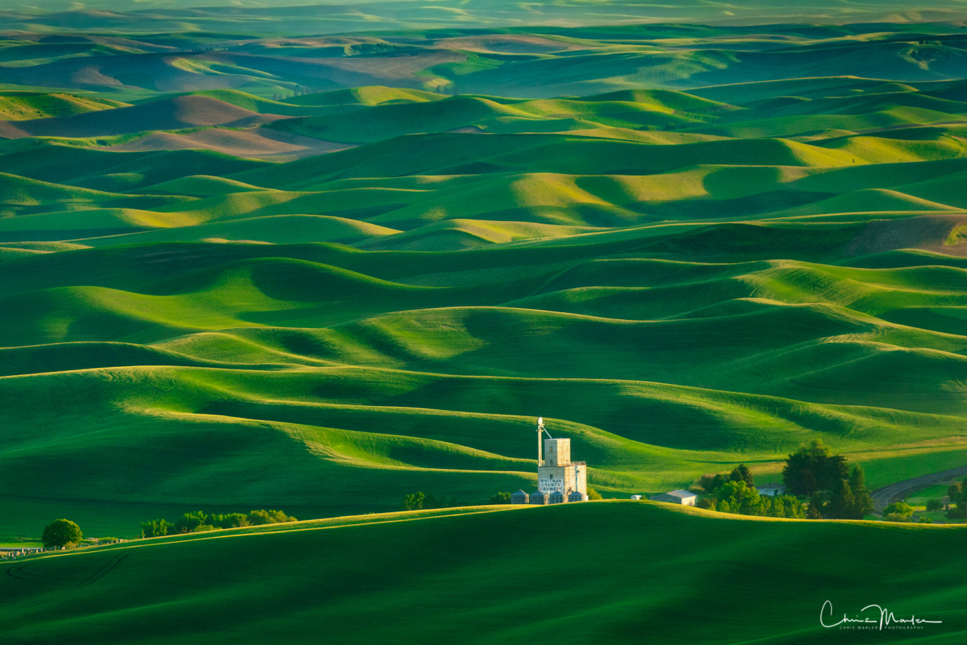Palouse, Steptoe Butte, Steptoe Butte State Park, wheat fields, rolling fields, photo